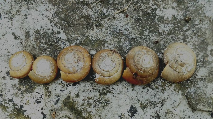 Close-up view of shells