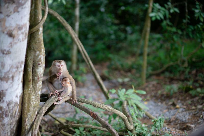Monkey sitting on tree trunk in forest