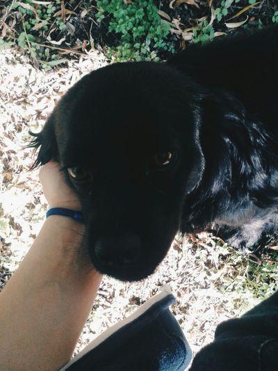 любовьмоя собачка Красотунчики черный