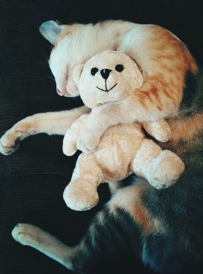 Tabby Teddy Bear Catsagram Our Pet