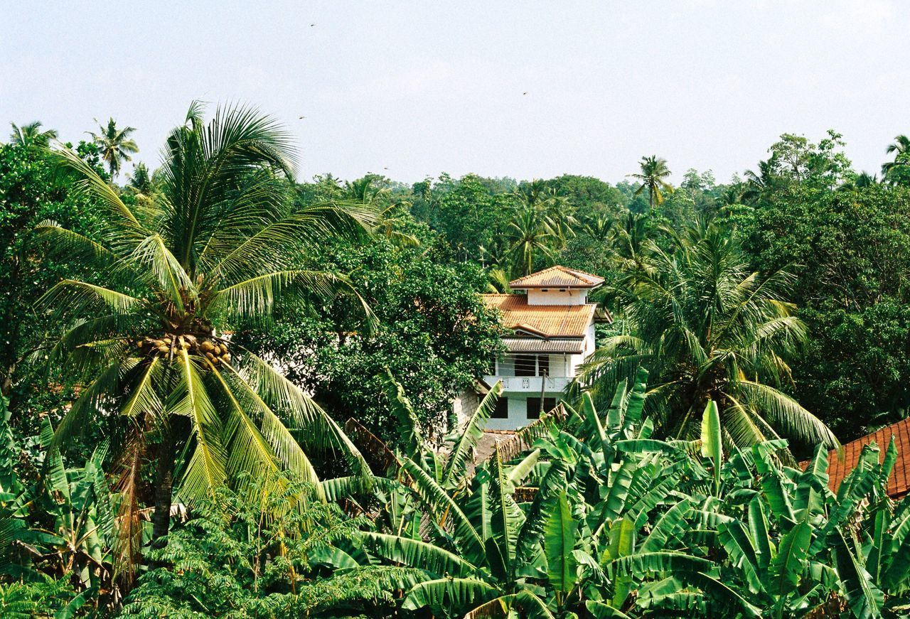 palm tree, tree, growth, green color, no people, plant, architecture, nature, day, outdoors, beauty in nature, scenics, sky