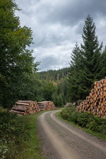 Stack of logs on road by trees in forest against sky