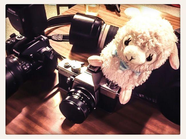 Llama Nipponfest Hangukon Cameras