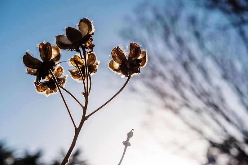 Close-up of plant against the sky