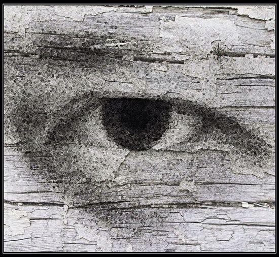 The Good Eye Series Look Me In The Eyes Overedited Eye Wood