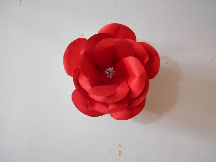 High angle view of red rose on table against white background