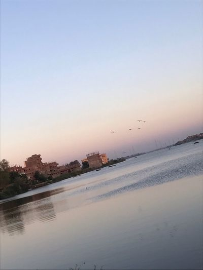 Beauty In Nature Birds Clear Sky Egypt Fowa Kafr Alshikh Nature Nile River No People Reflection Scenics Sky Sunset Tranquil Scene Tree Water