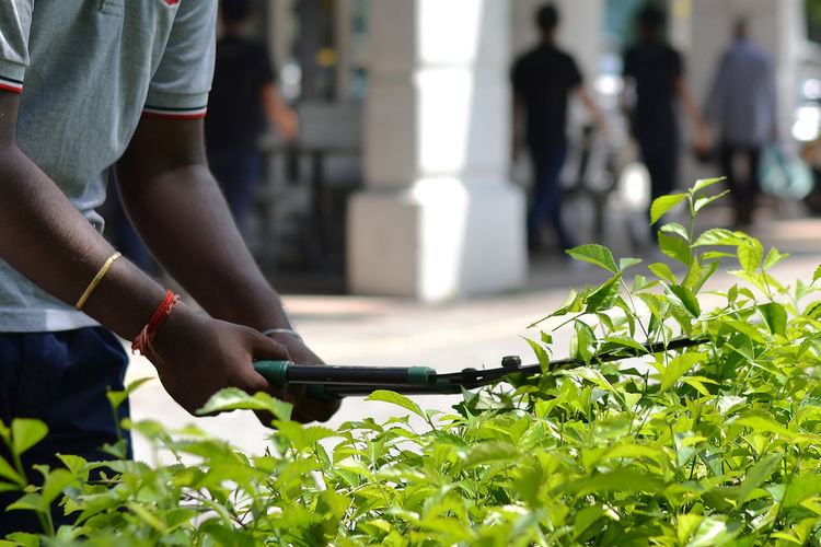 Midsection of man cutting plants in city