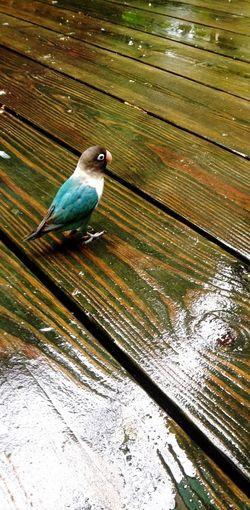EyeEm Nature Lover EyeEm IPhone Iphoneonly Jamaica Tropical Bird Bird Photography Wet Wood Grain 2014 Throwbackthursday  Nature's Diversities