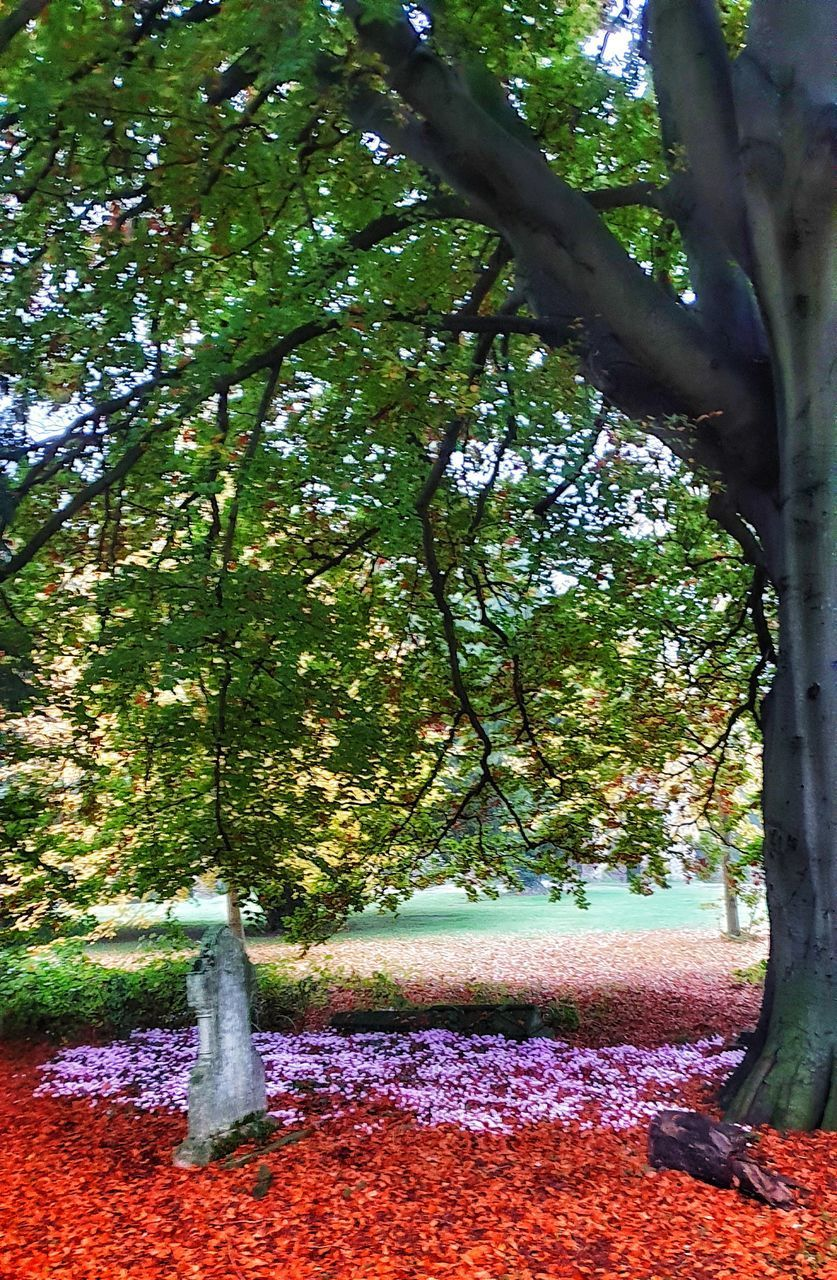 tree, plant, beauty in nature, growth, tree trunk, trunk, nature, no people, day, park, tranquility, outdoors, branch, green color, plant part, land, leaf, autumn, scenics - nature, tranquil scene, change