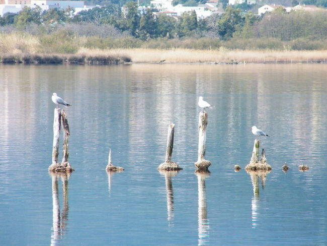 Animal Themes Animal Wildlife Animals In The Wild Beauty In Nature Bird Day Lake Large Group Of Animals Nature No People Outdoors Reflection Sky Swan Swimming Tree Water Waterfront