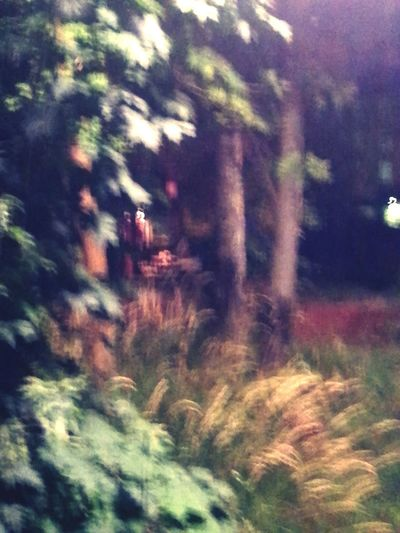Glitch Nature By Night Ready Steady Flash-mobile Forrest Blur Hallis In Wonderland Shaking The Leaves Grass And Trees