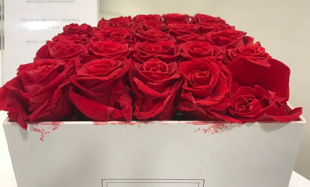 red, flower, flowering plant, rose - flower, close-up, rose, beauty in nature, freshness, indoors, no people, plant, inflorescence, nature, still life, flower head, petal, flower arrangement, container, high angle view, vulnerability, bouquet, bunch of flowers
