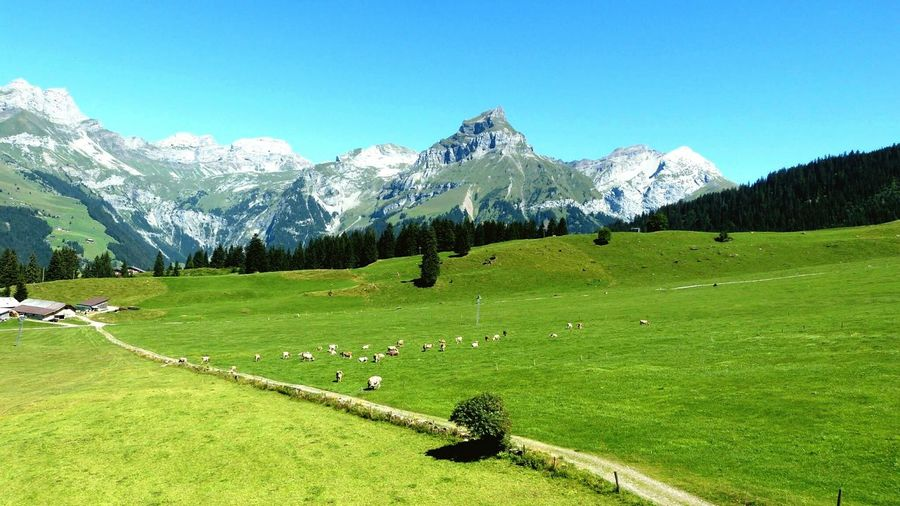 Reminds me of The Sound of Music Mount Titlis Zurich, Switzerland Natural Landscape Enjoying Life