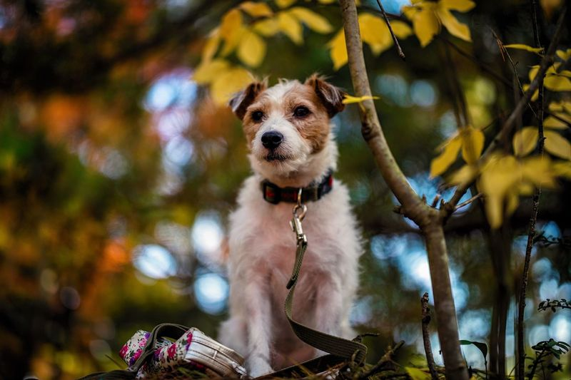 Dog One Animal Pets Animal Themes Mammal Domestic Animals Tree Outdoors Day Looking At Camera Focus On Foreground Leaf Low Angle View No People Portrait Nature Autumn Autumn Colors Fall Fall Colors Foll Foliage Dof Depth Of Field Bokeh Bokeh Photography