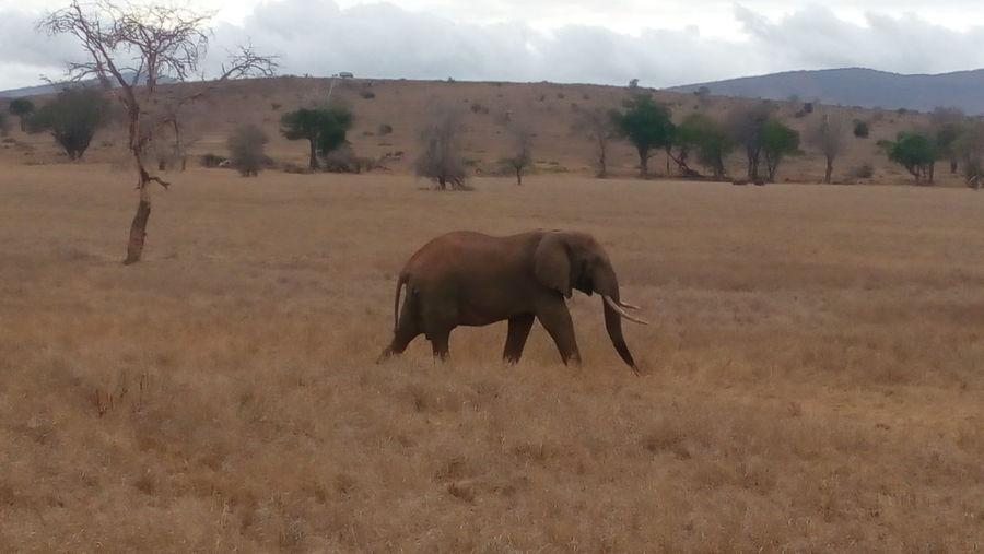 Phonetography Africanelephant LovelyKenya