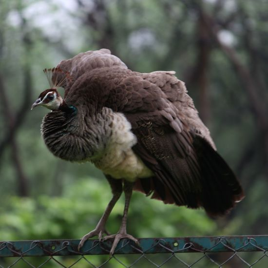 Bird Animal Wildlife Outdoors Nature Indroda Dslrphotography