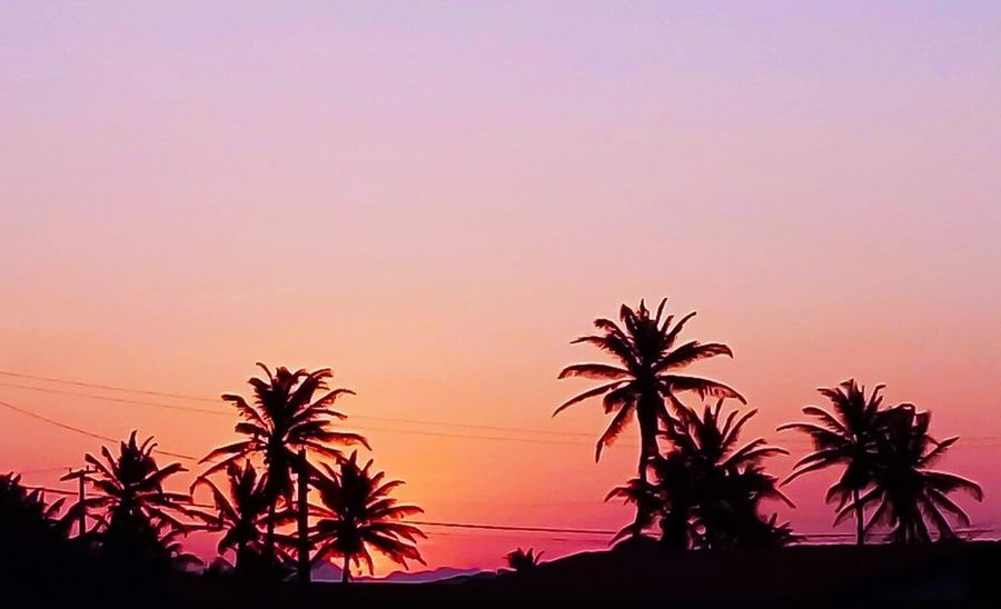 Natureza Nature Plant Vacations Close-up Paisagemlinda Sunset Tropical Climate Horizon Beauty Outdoors Nature Lifestyles Investing In Quality Of Life Palm Tree Silhouette Tree Scenics Travel Destinations Landscape Beauty In Nature Tranquility No People Sky Sea
