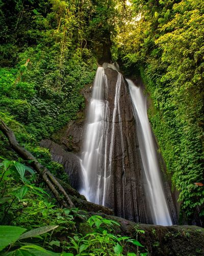 kuning or yellow Waterfall bali Indonesia Waterfall Nature Flow  Stream Landscape Tourist Attraction  Destination Travel Landscape Green Grass Plants View Scenics ASIA EyeEmNewHere