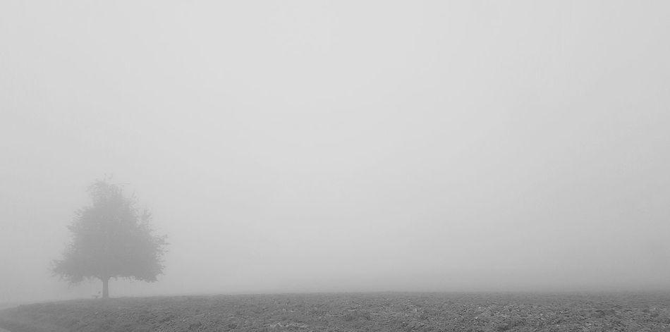 Spraying Fog Cereal Plant Sky Foggy Mist Weather