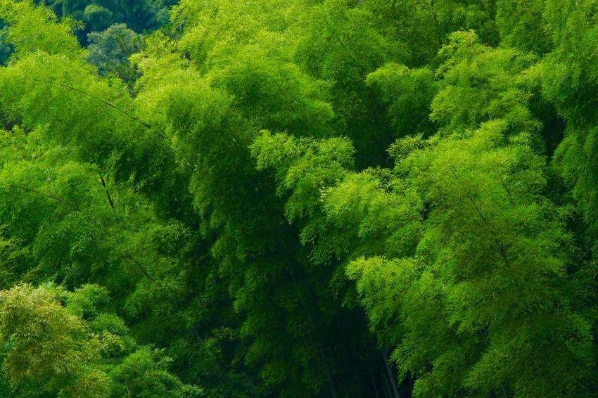 Bamboo Nature Chinese Village Southen China Fine Art Photography