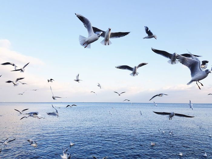 Flying Bird Animals In The Wild Flock Of Birds Animal Wildlife Large Group Of Animals Animal Themes