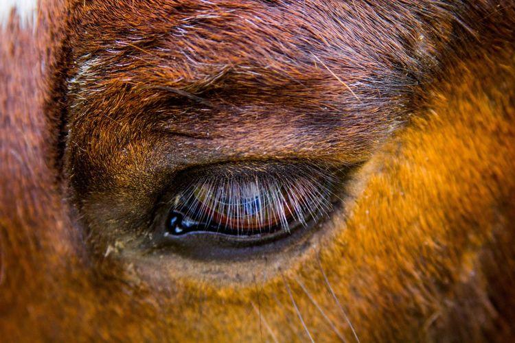 Extreme close up of animal eye