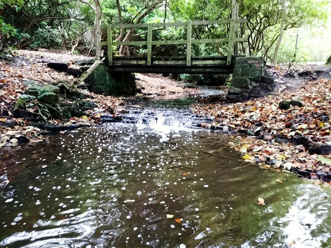 Day Water No People Outdoors Nature Tree Architecture Reflections In The Water Reflection Arrowe Park Arrowe Brook Arrowe Country Park Autumn Autumn Colors Autumn Leaves Scenics Tranquility Growth Forest Tree