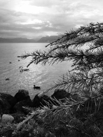 Morges Suisse Mont Blanc Nature Switzerland Lake View