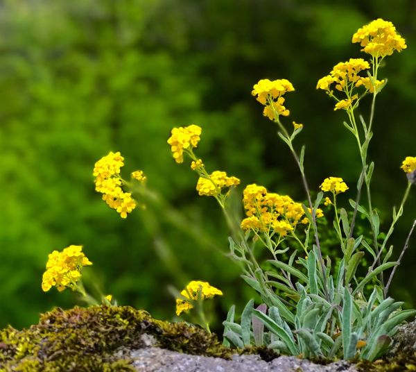 Flower Plant Growth Yellow Nature Fragility Beauty In Nature Outdoors No People Blooming Day Flower Head Freshness Marigold Close-up EyeEm Selects Your Ticket To Europe