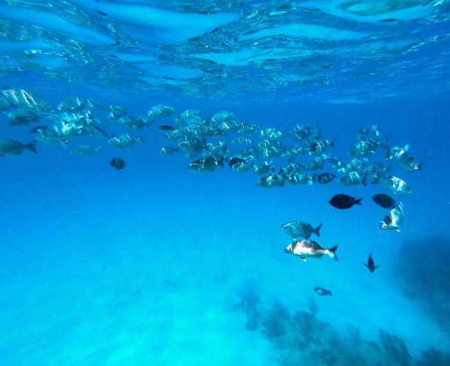 Diving EyeEmNewHere Underwater Sea Water Animal Animal Wildlife Animal Themes Holiday Moments Animals In The Wild UnderSea Sea Life Fish Aquatic Sport