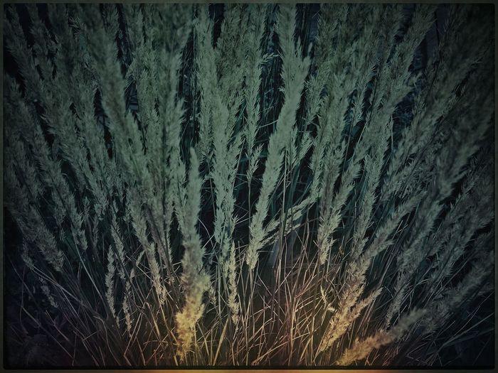 NEM Landscapes AMPt_Nature NEM Painterly ..anonymity..
