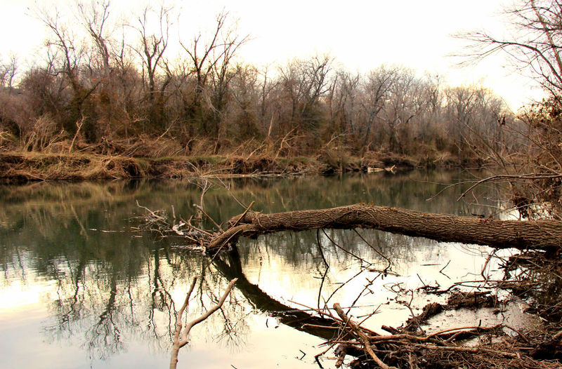 Reflection of bare trees in calm lake