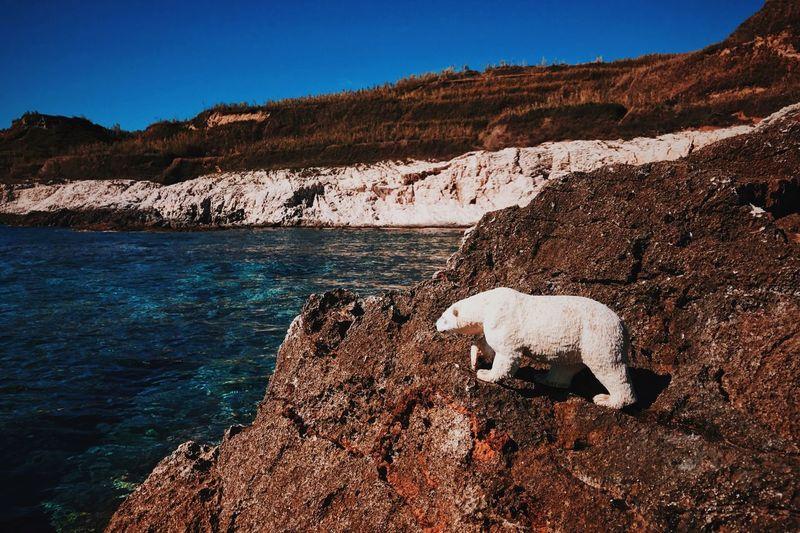 Global Warning Bear Global Warming Polar Bear Rock - Object Day Mammal Landscape Scenics Beauty In Nature Clear Sky Blue Sky