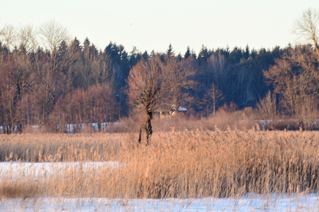field, nature, landscape, tree, day, outdoors, no people, growth, tranquility, grass, beauty in nature, bare tree, sky