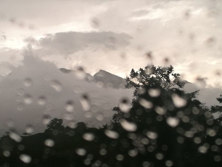 In a rainy day in Chiriqui, Panama at the sides of the Baru volcano Nature Live For The Story