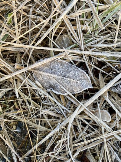High angle view of insect on dry grass