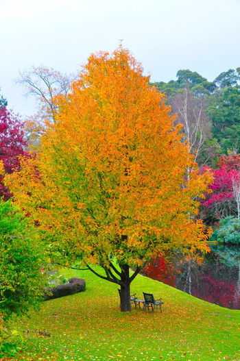 Trees Beauty In Nature Colourful Trees Lake Landscape - Australia Landscape_photography Tree Trees And Sky