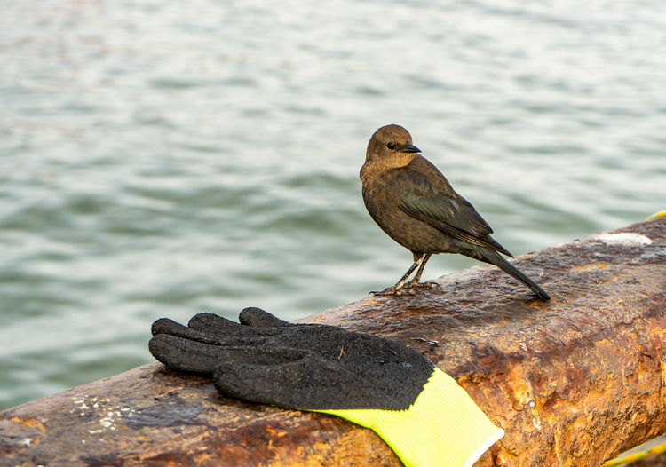 Animals In The Wild Animal Wildlife One Animal Animal Themes Perching Animal Bird Vertebrate Water Focus On Foreground Day No People Nature Solid Rock Rock - Object Wood - Material Rusty Outdoors