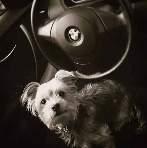 God Dog Pets Animal Domestic Animals Animal Themes One Animal Puppy Indoors  Black Background No People Mammal Day
