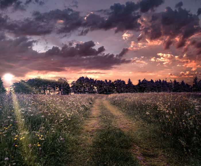 Sonnenuntergang auf dem Kandel Agriculture Beauty In Nature Cloud - Sky Environment Field Grass Growth Land Landscape Nature No People Outdoors Plant Rural Scene Scenics - Nature Sky Sunset Tranquil Scene Tranquility