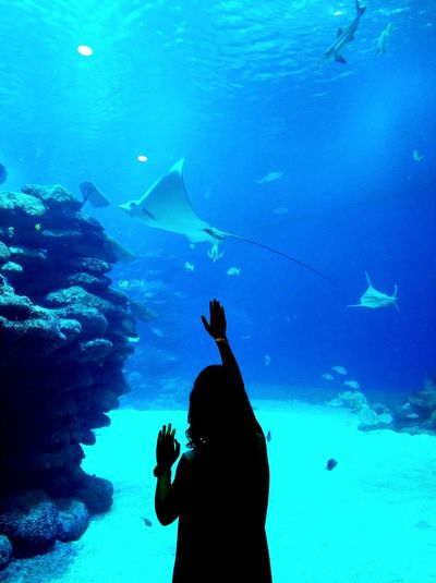 Fish Underwater Sea Life UnderSea Sea Silhouette Large Group Of Animals People Swimming One Person Water Animals In The Wild Animal Wildlife Nature Blue Adult Scuba Diving Animal Themes Beauty In Nature Adults Only