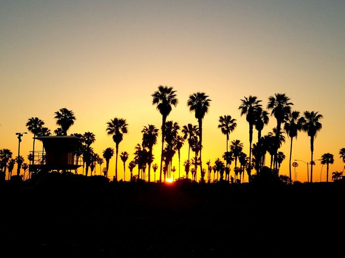 Sunrise at Mission Beach EyeEm Selects Morning Morning Light Sunrise San Diego Missionbeach California Eunoialux Landscape Beauty Nature View Tree Palm Tree Sunset Silhouette Sky Coconut Palm Tree Palm Leaf Tropical Tree Tropical Climate Tranquil Scene Scenics Tranquility The Traveler - 2018 EyeEm Awards
