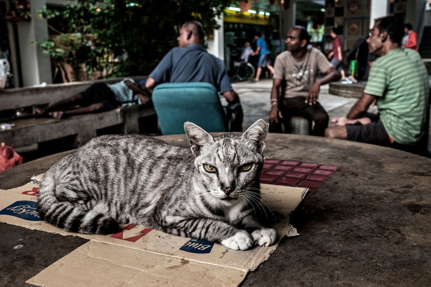 One Animal Sitting Feline Outdoors Day People Cat Void Deck Table Stray Housing Estate Residential Neighborhood Street Photography Streetphotography Streetphoto_color Street Life Streetlife Everybodystreet FUJIFILM X-T1