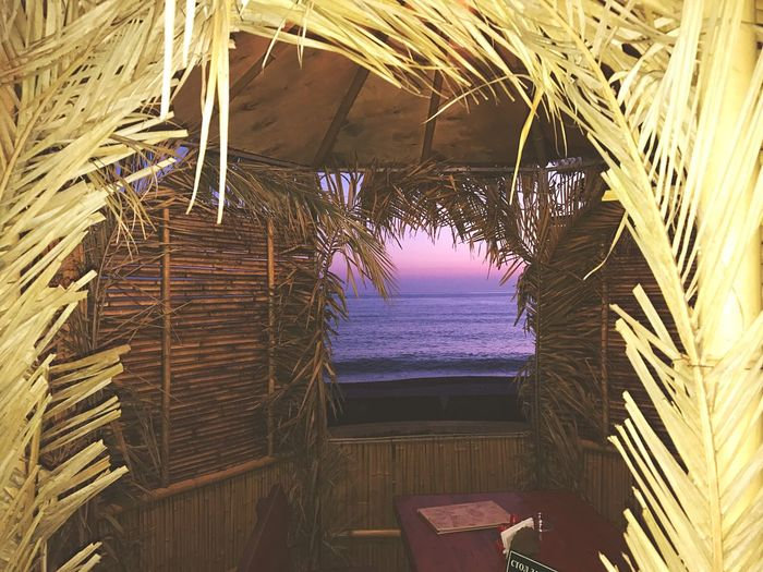 Thatched Roof Palm Tree Beach No People Outdoors Day Sea Nature Beauty In Nature Close-up Гагры Москва