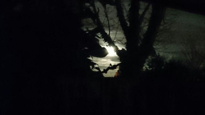 Moonrise Wintermoon Nature Night Sky Outdoors Silhouette Tree Nightsky Stars Trees