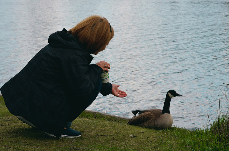 Rear view of woman crouching by canada goose and lake