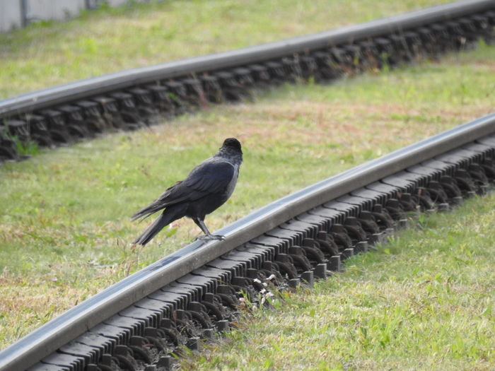 Plant Day Rail