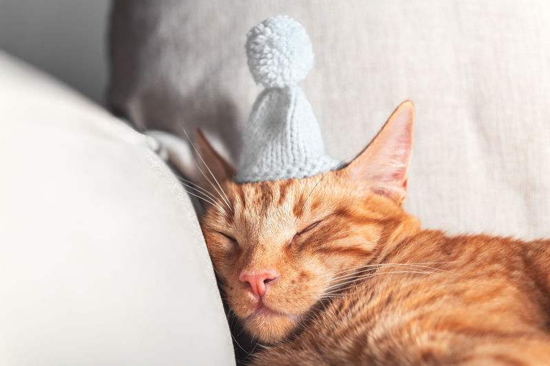 Cute little ginger cat sleeps on the sofa with woolen knitted tiny hat on, christmas or new year