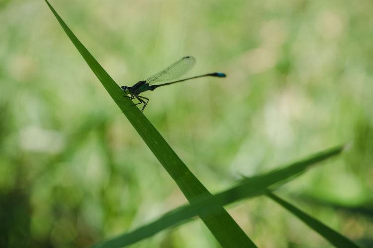 Close-up of grasshopper on leaf against blurred background